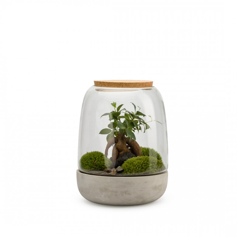 Jungle Lab by Capsule